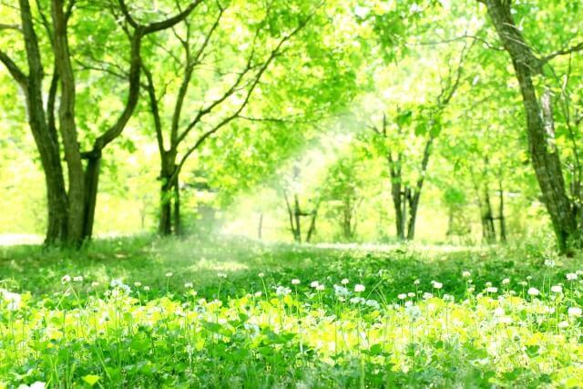 明るい森林