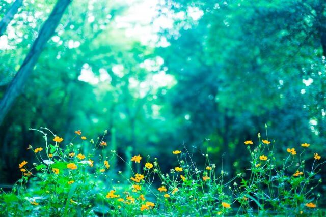 林と野の花